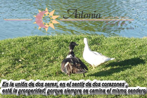 n la unión de dos seres, en el sentir de dos corazones , está la prosperidad, porque siempre se camina el mismo sendero